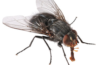 5 Ugly Truths About DIY Fly Control Methods