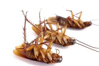 commercial pest control for cockroaches, rodents and other crawling insects