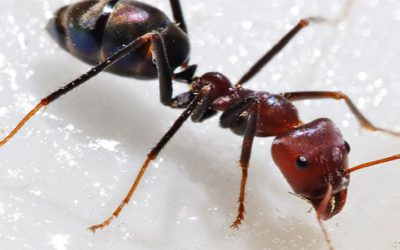 Ants in your pant (ry)? Our guide to ant control.