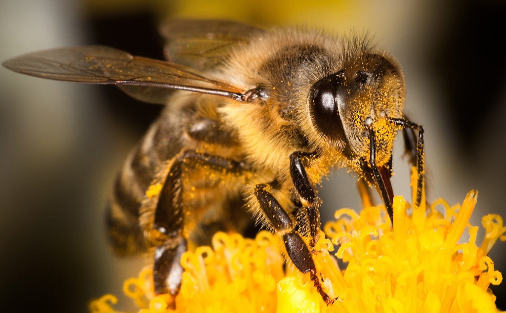 Dancing bees? Here's how these stinging insects 'speak' to each other [Infographic]