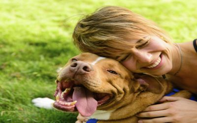 When pets become pests: Common pet diseases found in your home