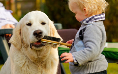 Tick bites in children and pets – what you need to know