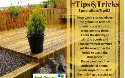 Need to know: Termite Control 101