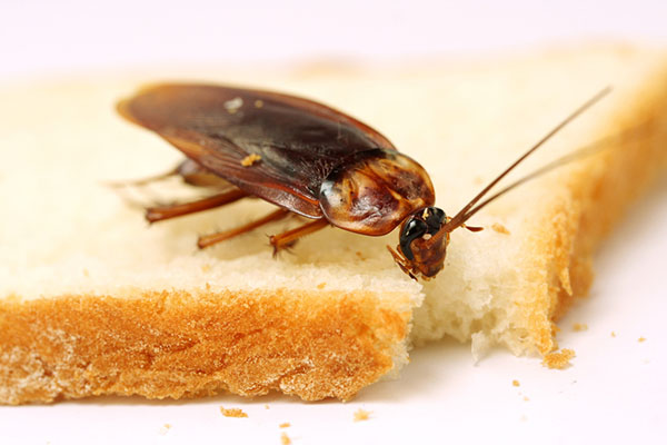 Why you can't get rid of cockroaches in your restaurant